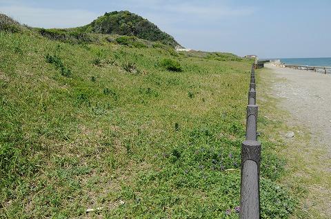 太東海浜植物群落/千葉県